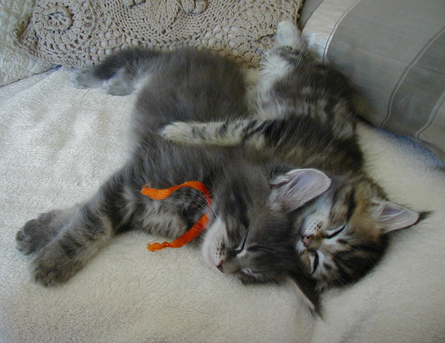 \u0026quot;Sherman\u0026quot; et \u0026quot;Hydéis\u0026quot;sont deux inséparables  ils dorment, jouent , sont tout le temps ensemble!